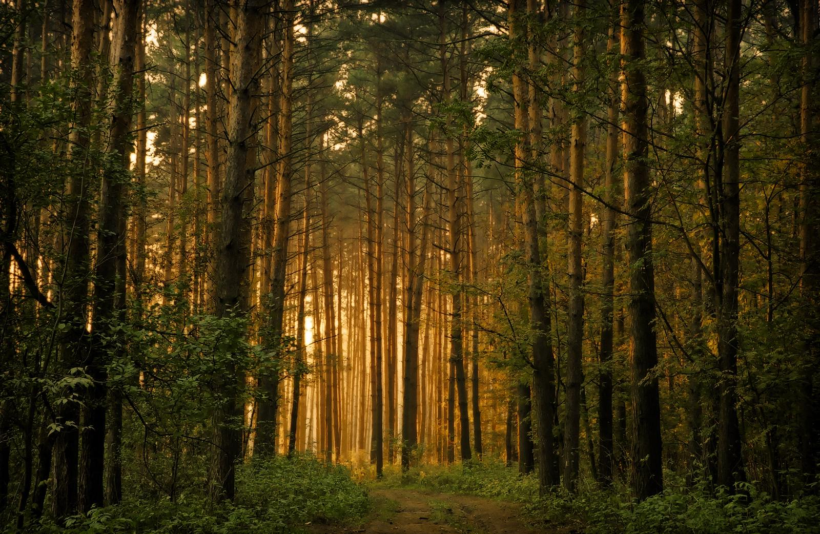 The-Forest-Trees